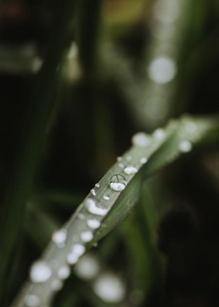 Vattendroppar på grässtrå
